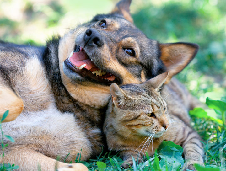 Cat & Dog Care